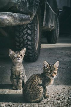 Kleine stoere kittens van Elianne van Turennout