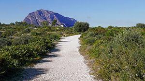 Groene zone bij Cap de Sant Antoni bij Denia met zicht op het Montgo massief