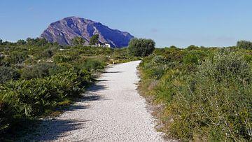 Grünzone am Cap de Sant Antoni bei Denia mit Blick auf das Montgo-Massiv von Gert Bunt