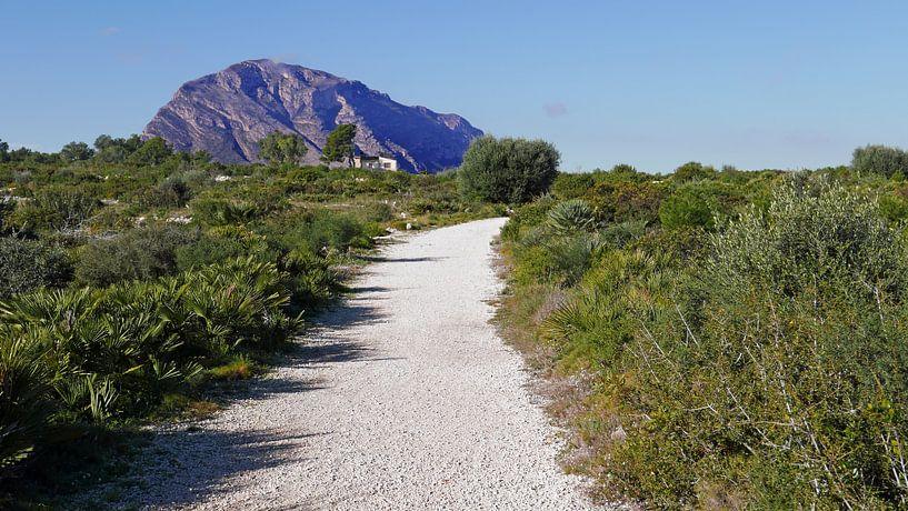 Groene zone bij Cap de Sant Antoni bij Denia met zicht op het Montgo massief van Gert Bunt