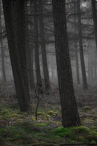 Het spook bos van
