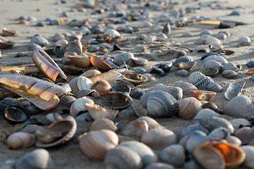 Shells von Jacky Schuitert