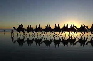 Kamelen met zonsondergang
