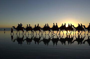 Kamelen met zonsondergang van Roel Dijkstra