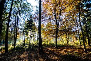 in het bos 03