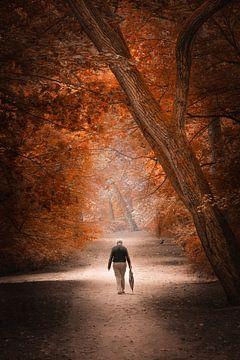 Herfst wandeling van Karel Ton