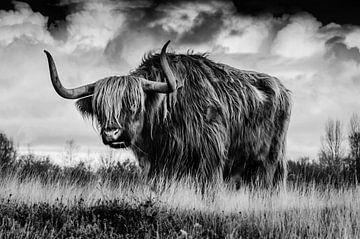 Rind auf dem Feld in schwarz-weiß von Atelier Liesjes