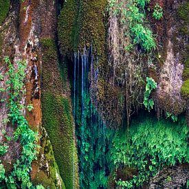 Natuurlijk Groen van Anouschka Hendriks