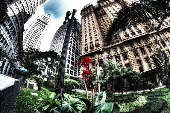 Banco do Brasil van  Frank Kanters