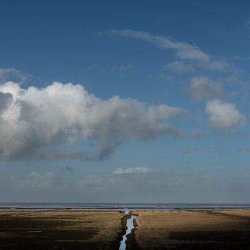 Salzwiese im Norden von Groningen (quadratische Version) von Bo Scheeringa Photography