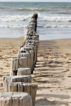 Palen op het strand van Christel Smits