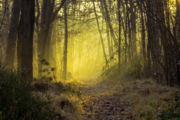 Magie im Wald von Stephan Krabbendam