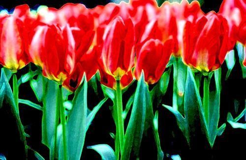 My field of Tulips van