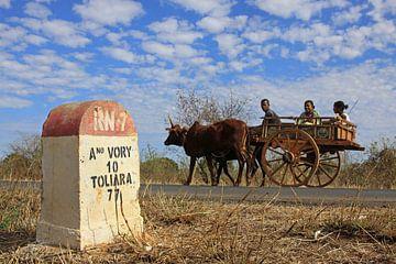 Zeboekar op route nr.7 in Madagaskar  sur