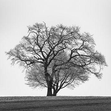 Boom in zwart-wit van Denis Feiner