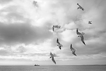 Möwen im Flug von Barbara Brolsma
