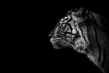 Sumatra-Tiger mit dunklem Hintergrund von Daphne van Dam