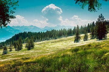 Wiesen und Wälder im Allgäu von Thomas Heitz