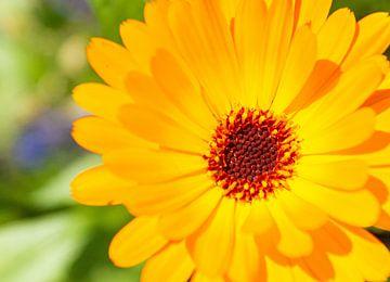 Nahaufnahme einer leuchtend gelben Blume von Liv Jongman