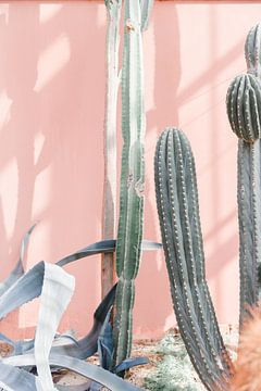 Cactussen in kas tegen roze muur - botanische print van Robin Polderman