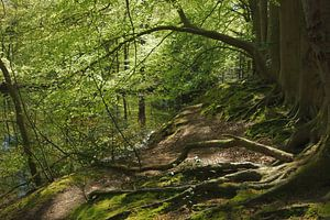 Bos in de lente
