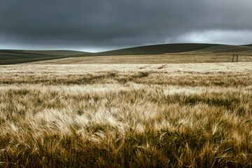 Landscape Cap Griz Nez van Peter Poppe