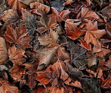 When autumn meets winter.. van