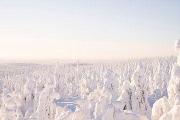 Magische Landschaft in Finnisch-Lappland von elma maaskant