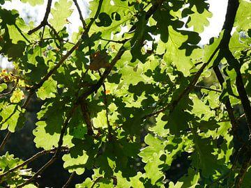 Eichenblatt und Sonnenlicht von Wim vd Neut