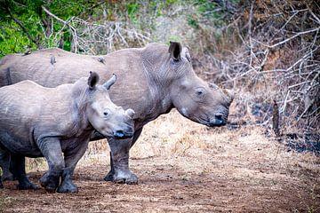 Moeder en kind neushoorn van Ineke Huizing
