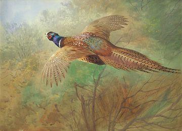 Fasan im Flug, Archibald Thorburn