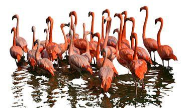Flamingo's van Jessica Berendsen