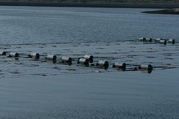 Zeewierkwekerij Zeeland van Mirjam Welleweerd
