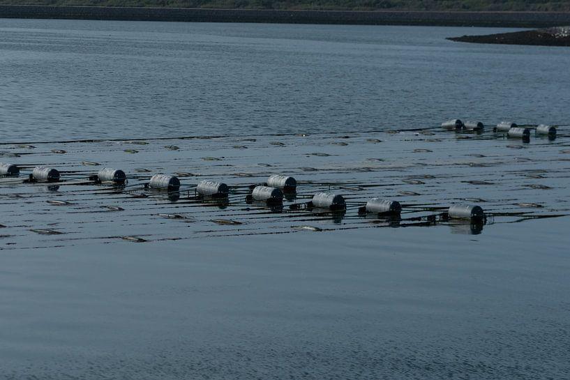 Pépinière d'algues de Zeeland sur Mirjam Welleweerd