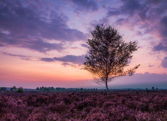 Purple heather  van Roelie Steinmann