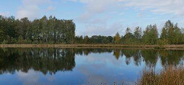 Berken spiegelend in het water van Wim vd Neut
