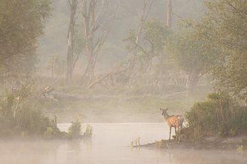 Rothirsch bei Nebel in einem Teich. von Andius Teijgeler