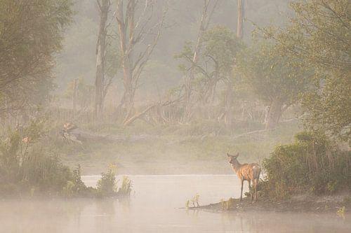 Edelhert tijdens mist in een waterplas. van Andius Teijgeler