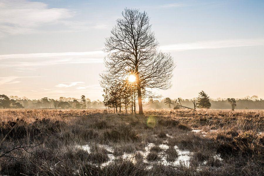 Prachtige zonsopkomst in het Leersumse Veld. van De Utrechtse Internet Courant (DUIC)