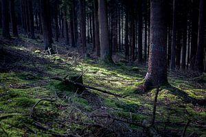 Zonnestraal in een donker woud van