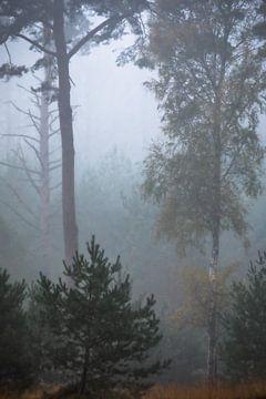 Misty forest van Linda Raaphorst