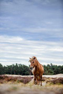 Pony in der Natur von Lotte van Alderen