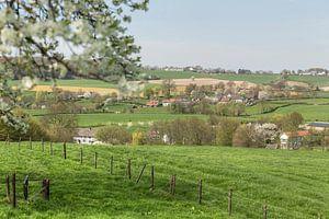 Bloesemtijd in Zuid-Limburg van