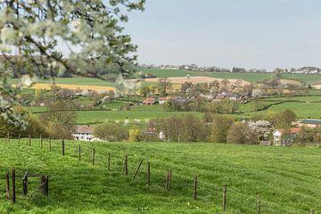 Bloesemtijd in Zuid-Limburg van John Kreukniet