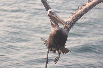Help, een pelikaan! von René Boeff