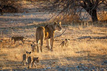 Leeuwenmoeder met welpen van Simone Janssen