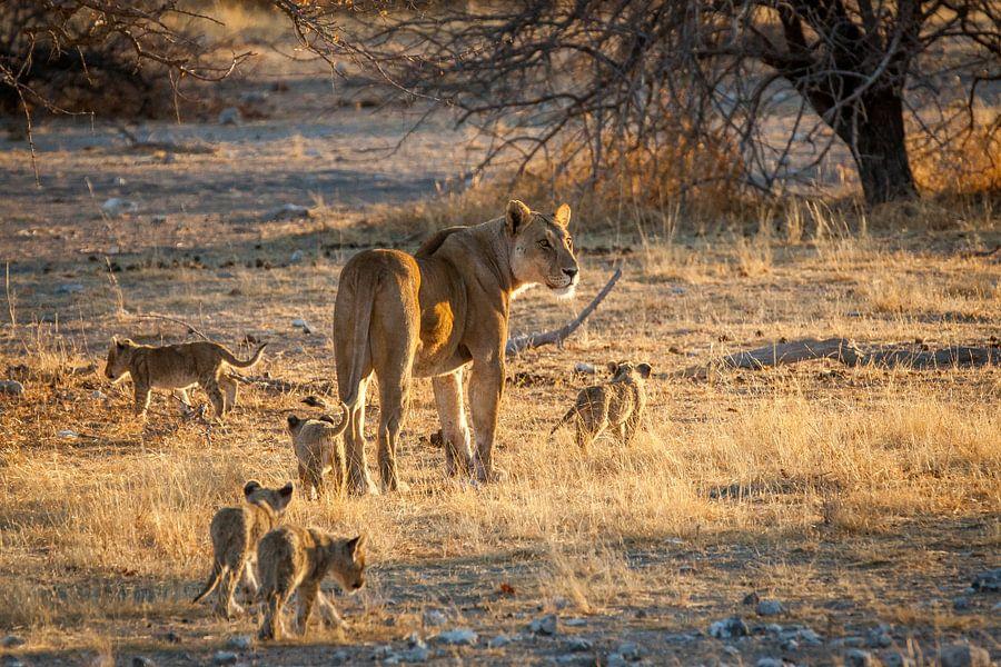 Leeuwenmoeder met welpen