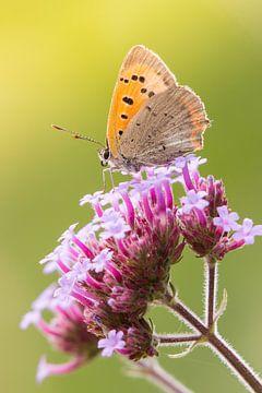 Kleiner Schmetterling von Peter Deschepper