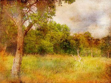 Sommerwald von Claudia Gründler