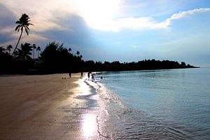zon, zee, strand en palmen
